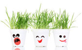 A pots of grass isolated on white — Stock Photo