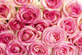 Beautiful bouquet of pink roses, close up — Foto Stock
