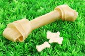 Osso di cane sull'erba verde — Foto Stock
