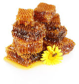 Sweet honeycomb with honey, bee on flower, isolated on white — Stock Photo