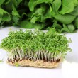 Fresh cress salad on table — Stock Photo #12363514