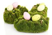 Grön mossa med ägg isolerad på vit — Stockfoto