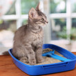 Small gray kitten in blue plastic litter cat on wooden table on window background — Stock Photo #12393245