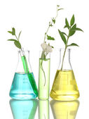 Test-tubes with a colorful solution and plant isolated on white close-up — Stock Photo