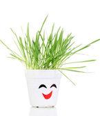 Einen topf mit gras isoliert auf weiss — Stockfoto