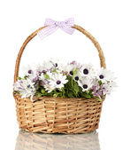 Bouquet of beautiful summer flowers in basket, isolated on white — Stock Photo