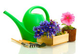 Watering can, tools and flowers isolated on white — Stock Photo
