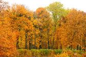 Orange automne ruelle de feuille érable — Photo