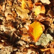 Stock Photo: Leaves, golden autumn