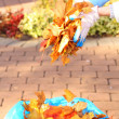 Stock Photo: Maple leaves in hand , golden autumn