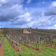 Vineyard in Tokaj — Foto de stock #10911767
