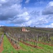 Vineyard in Tokaj — Foto Stock #10911767