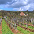 Vineyard in Tokaj — Stockfoto #11030887