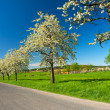 Road in the Spring — Stock Photo