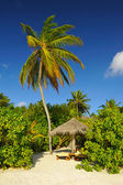 Beach wth coconut palms and deck chair — Stock Photo