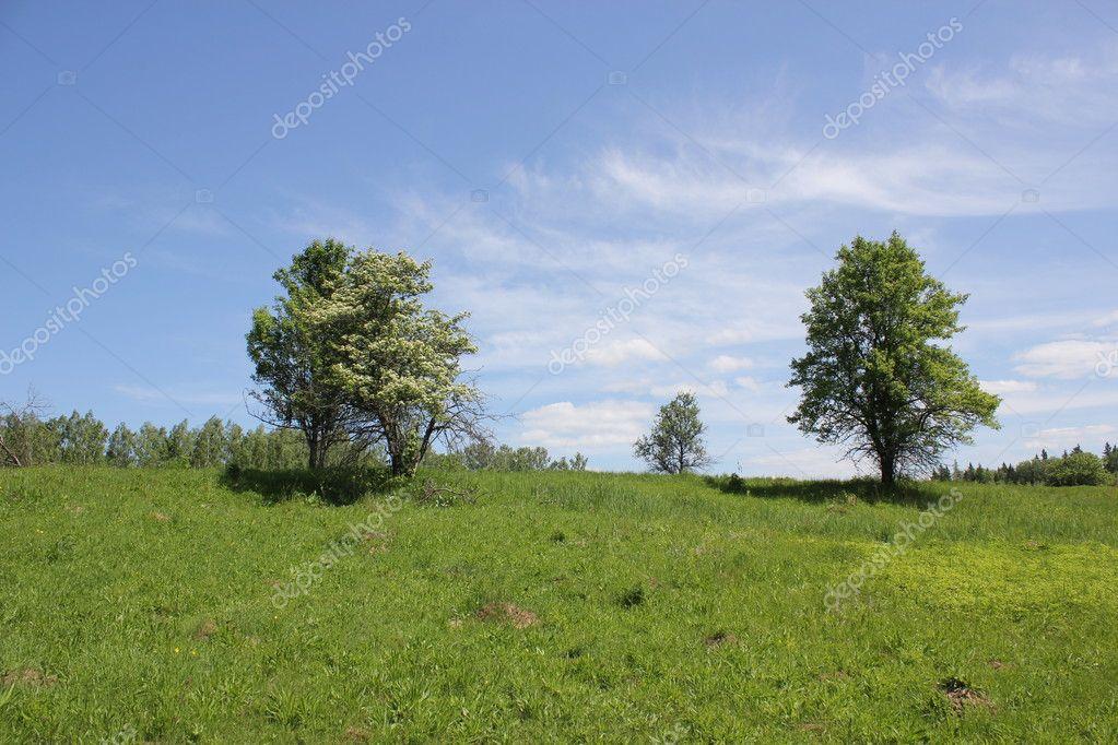 名侦探��ce�f�x�_绿树草森林风景&#