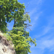Cliff in Gdynia POLAND — Stock Photo