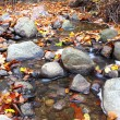 Leaf on stone in a creek — Stock Photo