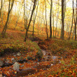 Autumn forest — Stock Photo #11315641