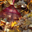 Rake and autumn leaves — Stock fotografie