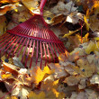 Rake and autumn leaves — Stockfoto