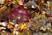Rake and autumn leaves — Stock Photo
