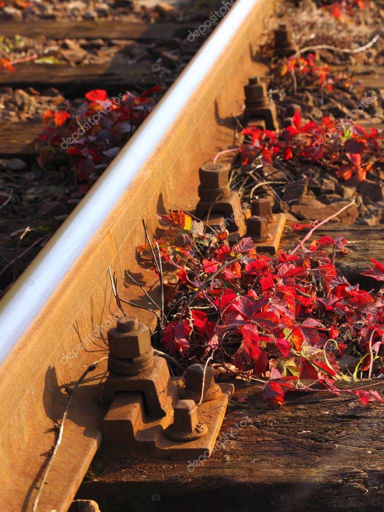 Rail Road Tracks and red flower- outdoor — Stock Photo #11322261