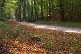 Rural autumn scenery — Stock Photo