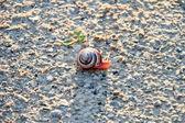 Renkli salyangoz — Stok fotoğraf