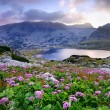 Lake on mountain and flowers — Stock Photo #11648040