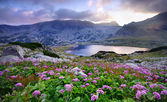 Lake on mountain and flowers — Stock Photo