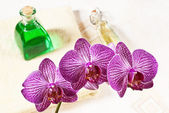 Orchid in the bathroom — Stock Photo