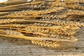 пачка пшеницы — Стоковое фото