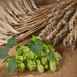 Stock Photo: Barley with hop cones
