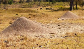 Australian Bull Ants Nest Granite Mound — Stock Photo