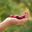 Stock Photo: Hand with cherries