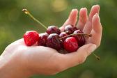 Cherries in hand — Stockfoto