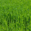 Meadow grass - Stock Photo