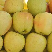 Apple frukt — Stockfoto