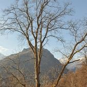 Mountain winter scene — Photo