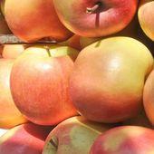 Frutta mela — Foto Stock