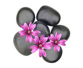 Black spa stones and pink flowers isolated on white — Stock Photo