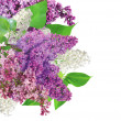 Beautiful Lilac Flowers border — Stock Photo