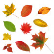 Big collection beautiful colourful autumn leaves isolated on whi — Stock Photo #12204015