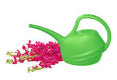 Green watering can with red flowers isolated on white — Stockfoto
