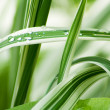 Grass with water drops, dew. Green natural background — Stock Photo