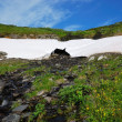 Melting snowfield on the green hill. — Stock Photo
