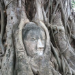 The Buddha head in the tree roots. — Stock Photo