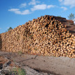 Stock Photo: Enormous wood stack against blue sky. Deforestation.