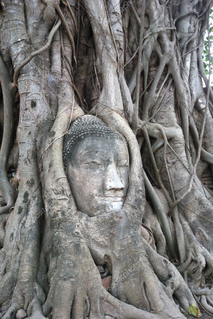 A detached Buddha head is entangled in roots of the old tree in Wat Ratchaburana. It rises a few centimeters each year. — Stock Photo #10771109